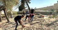 আল-আকসায় ফিলিস্তিনি শহীদদের কবরস্থান গুঁড়িয়ে দিল ইসরাইল